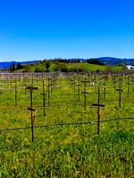 Spring in the Napa Valley